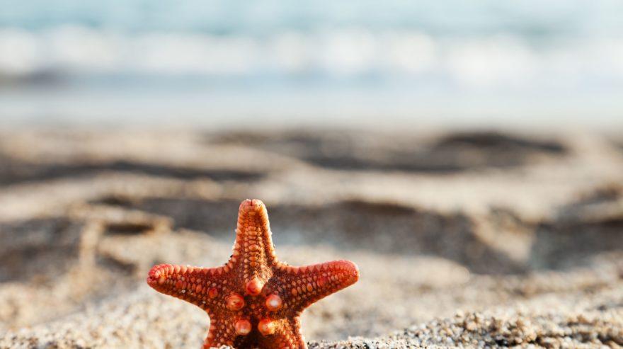 Imagem de Para onde ir nas férias de verão?